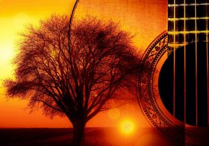 acoustik tree akustik band professionell